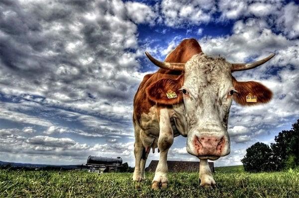 HDR фото животного