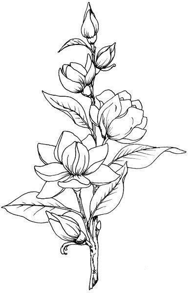 Цветок рисунок