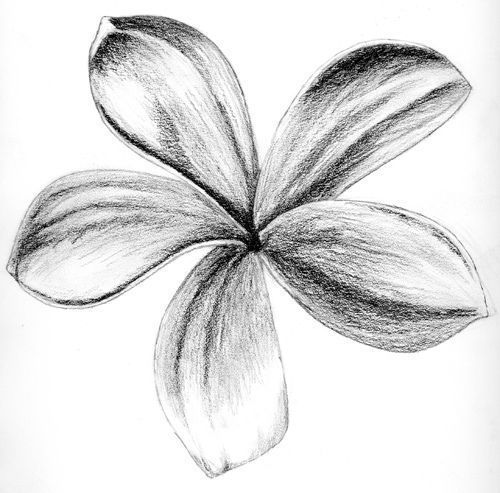 Листья цветка рисунок