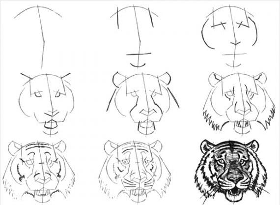 Голова тигра рисунок