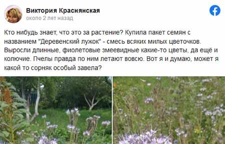 Просьба помочь найти название растений