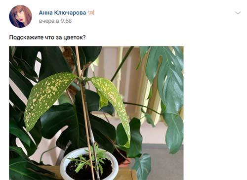 Поиск названия цветка