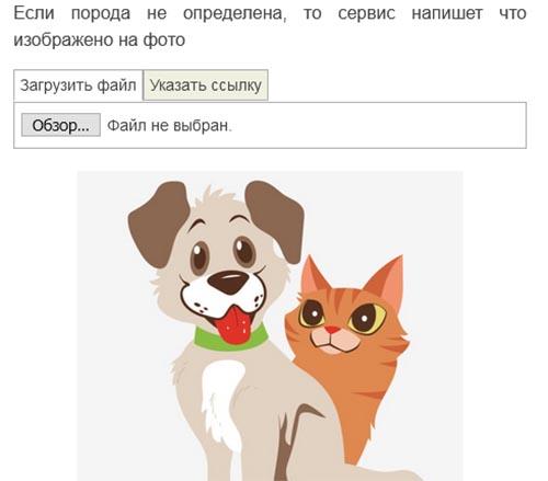 Найдите форму для поиска собак