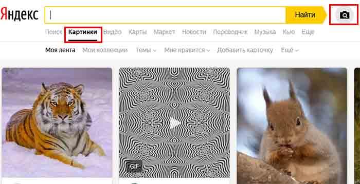 Поиск породы собак