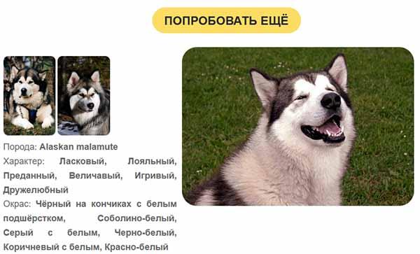 Информация о собаке