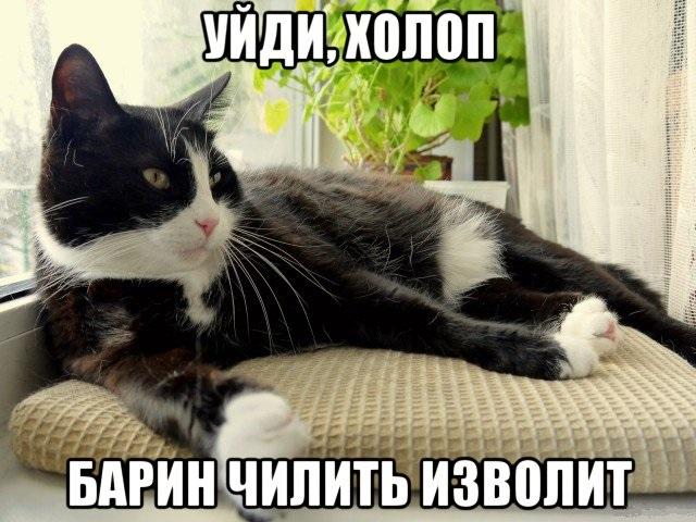 Чилящий кот