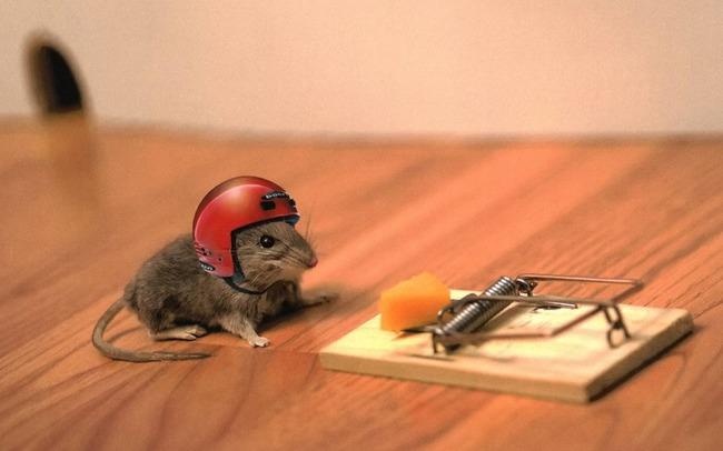 Мышь и сыр в мышеловке
