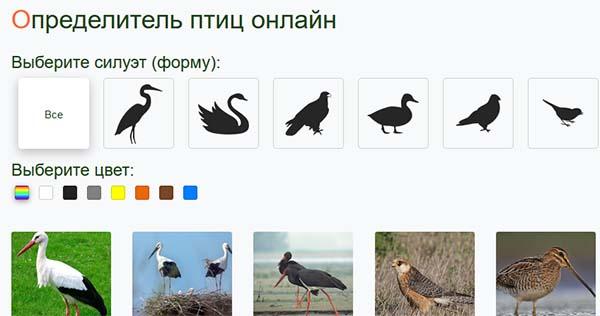 Выбор силуэта птицы