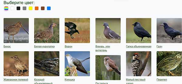 Выбор цвета птиц