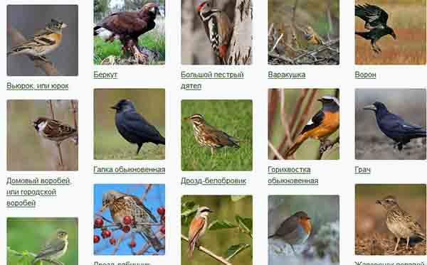 Картинки птиц на сайте