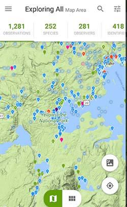 Карта в iNaturalist