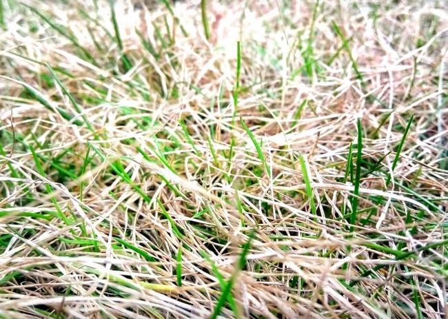 Осветленная трава