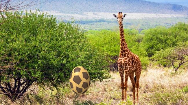 Жираф рядом с кустами