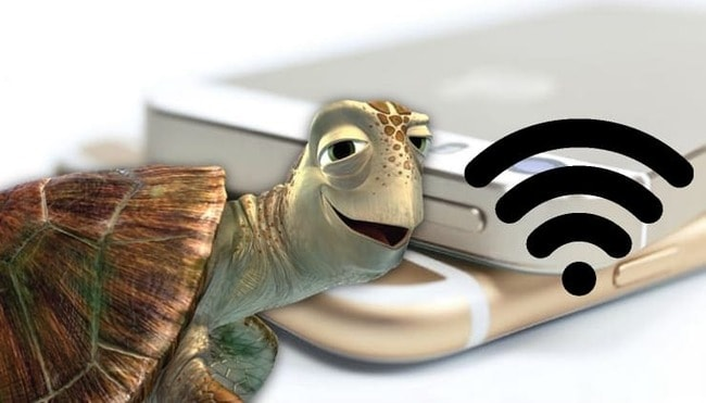 Черепаха рядом со значком Wi-Fi
