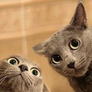 Две морды котов