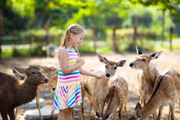 Заставка зоопарк